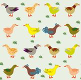 Pattern for children. Ducks on the meadow. Pattern for children Royalty Free Stock Image