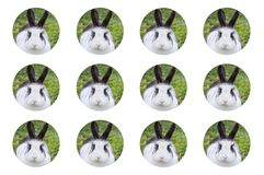 Pattern with circles of rabbit close-up with white background stock photo