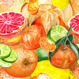 Pattern with citruses Stock Image