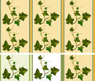 Pattern: climber ivy and stripes Royalty Free Stock Images