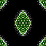 Pattern of closeup green cactus isolated on the black Stock Photography