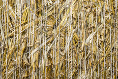Pattern closeup Natural texture of straw bale of cereals wheat grain surface rolled. Pattern closeup Natural texture of a straw bale of cereals wheat grain stock photos