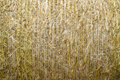 Pattern closeup Natural texture of straw bale of cereals wheat grain surface rolled. Pattern closeup Natural texture of a straw bale of cereals wheat grain stock photo