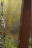 Pattern of cobwebs on the chain swing in the garden in autumn mi Royalty Free Stock Image