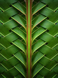 Pattern with coconut leaves Royalty Free Stock Images