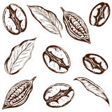 Pattern coffee and cocoa. Pattern of coffee beans, coffee beans, cocoa leaves and hand-drawn on a white background Royalty Free Stock Images