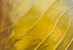 Pattern color gold. On cement concreat royalty free stock images