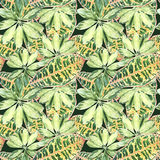 A pattern of colored variegated palm leaves on dark green Stock Photography