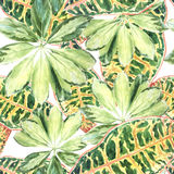 A pattern of colored variegated palm leaves Stock Photography