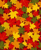 Pattern of colorful autumn leave Stock Images