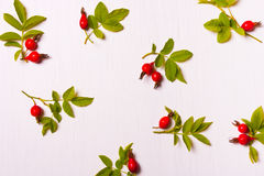 Pattern, composition of red flowers, berries and green leaves.Fl Royalty Free Stock Photo
