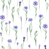 Pattern with cornflowers Stock Photos