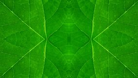 Abstract background of green leaf sample stock photos