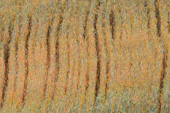 Pattern created by wheat ears almost ripe in june Stock Photo