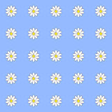 Pattern of daisies Stock Image