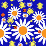 Pattern with daisies and ladybirds Stock Photo