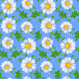 Pattern of daisies. Seamless pattern of daisies with green leaves on a blue background. Vector Royalty Free Stock Images