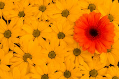 Pattern of daisies. A pattern of yellow daisies with a red daisy on top Royalty Free Stock Photo