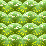 Pattern with daisy fields in the volume. Stock Images