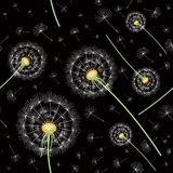 Pattern of dandelions Royalty Free Stock Image