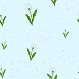 Pattern dandelions. Illustration of a loving heart.March 8 Royalty Free Stock Photography
