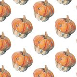 Pattern with decorative pumpkins on white background vector illustration