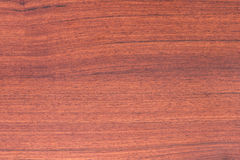 Pattern detail of teak wood texture Stock Photography