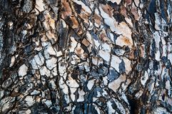 Pattern and details of a tree bark Royalty Free Stock Images