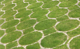 Pattern developed through green grass Royalty Free Stock Image