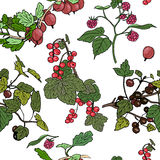 Pattern different berries. Red currant, black currunt, raspberry, gooseberry. Hand drawn vector illustration Stock Images