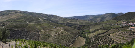 Pattern - Douro Terraces of Vineyards Panorama Royalty Free Stock Images