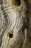 Pattern of a dried out tree Royalty Free Stock Photos