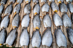 Pattern of dry fishes Stock Images