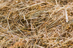A pattern of dry hay with a hollow place. Hay for cattle breeding needs Royalty Free Stock Photo
