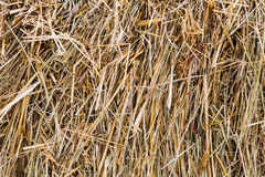 A pattern of dry hay in wintertime. Food for cattle Stock Image
