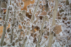 A pattern of dry leaves and branches covered with snow and frost. Armenia, Caucasus mountains Stock Photo