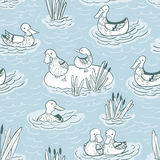 Pattern with ducks and reed on Stock Photo