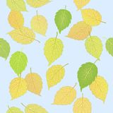 Pattern with elegant autumn leaves Stock Photography