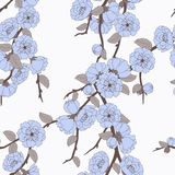 Pattern with elegant sakura flowers Royalty Free Stock Photography
