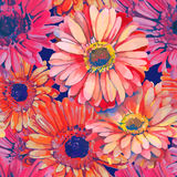 Pattern element of colorful gerbera flowers Royalty Free Stock Photo