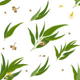 Pattern of Eucalyptus Leaves, Flowers and Seeds. Seamless vector pattern of eucalyptus leaves, flowers and seeds Stock Image