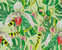 Pattern of exotic plants: orchids, flycatcher and monstera on green background. Pattern of exotic plants: orchids, flycatcher and monstera. Tropical jungle in Stock Photography