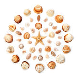 Pattern of exotic seashells in the shape of a circle. Isolated o Stock Photo