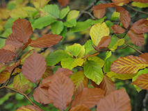 Pattern of fall leaves Stock Photography