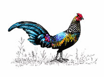Pattern with farm rooster silhouette Royalty Free Stock Photography