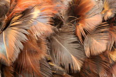 Pattern of feathers. Closeup image of feathers in pattern Royalty Free Stock Photo