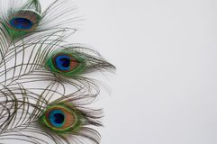 Pattern with feathers. Pattern with a peacock feathers Stock Image