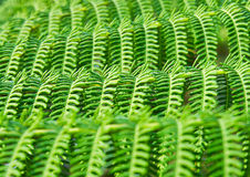 Pattern of fern leaves. Royalty Free Stock Image