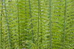 Pattern of fern leaves and stalks Royalty Free Stock Photography