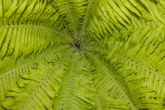 Pattern of fern leaves and stalks Stock Photography